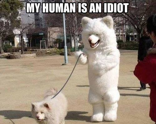 Yes, your human is an idiot!
