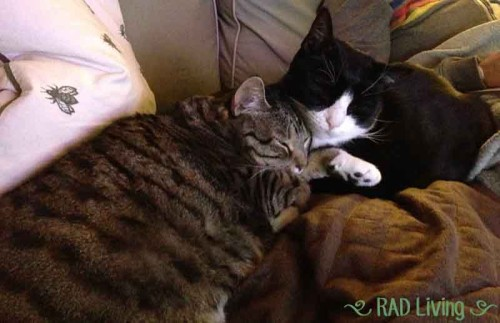 Cuddly-Cats2