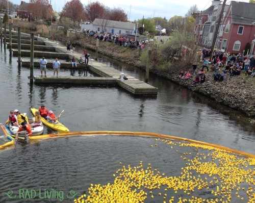 Milford-CT-Duck-Race-2014-13