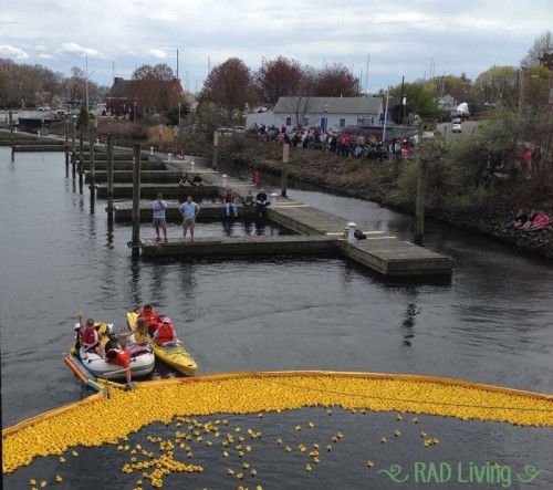 Milford-CT-Duck-Race-2014-14