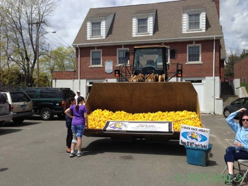 Milford-CT-Duck-Race-2014-5
