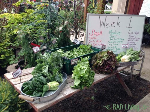 Robert-Treat-2014-CSA-Week1-4