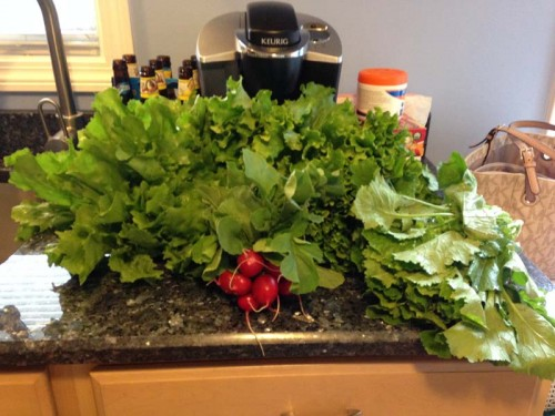 Robert-Treat-2014-CSA-Week1-7