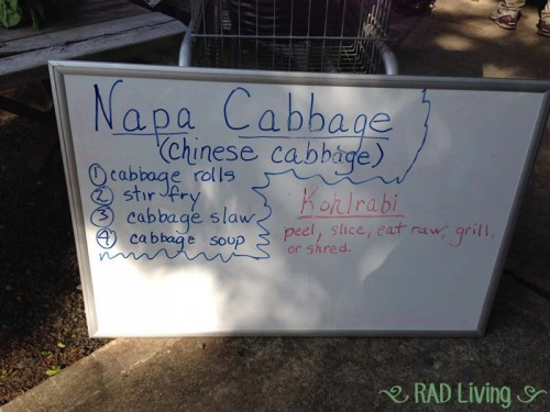 Robert-Treat-2014-CSA-Week3-Cabbage-Instructions