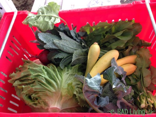 Robert-Treat-2014-CSA-Week5-Box