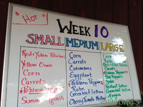 Robert-Treat-2014-CSA-Week10-Board