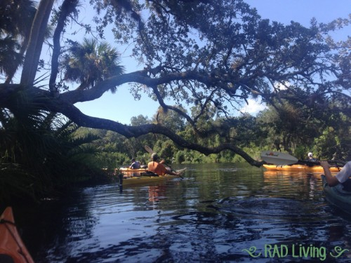 Kayaking-on-the-Sebastian-River-9